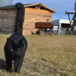Spock/Toothless touring the property