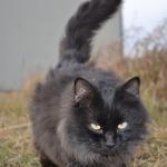 Kitten D Mitten (aka the Neighbour's Cat)
